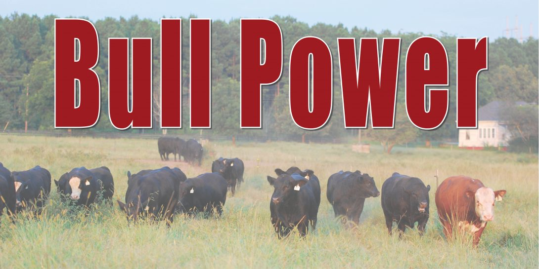 bull-power-feature-image