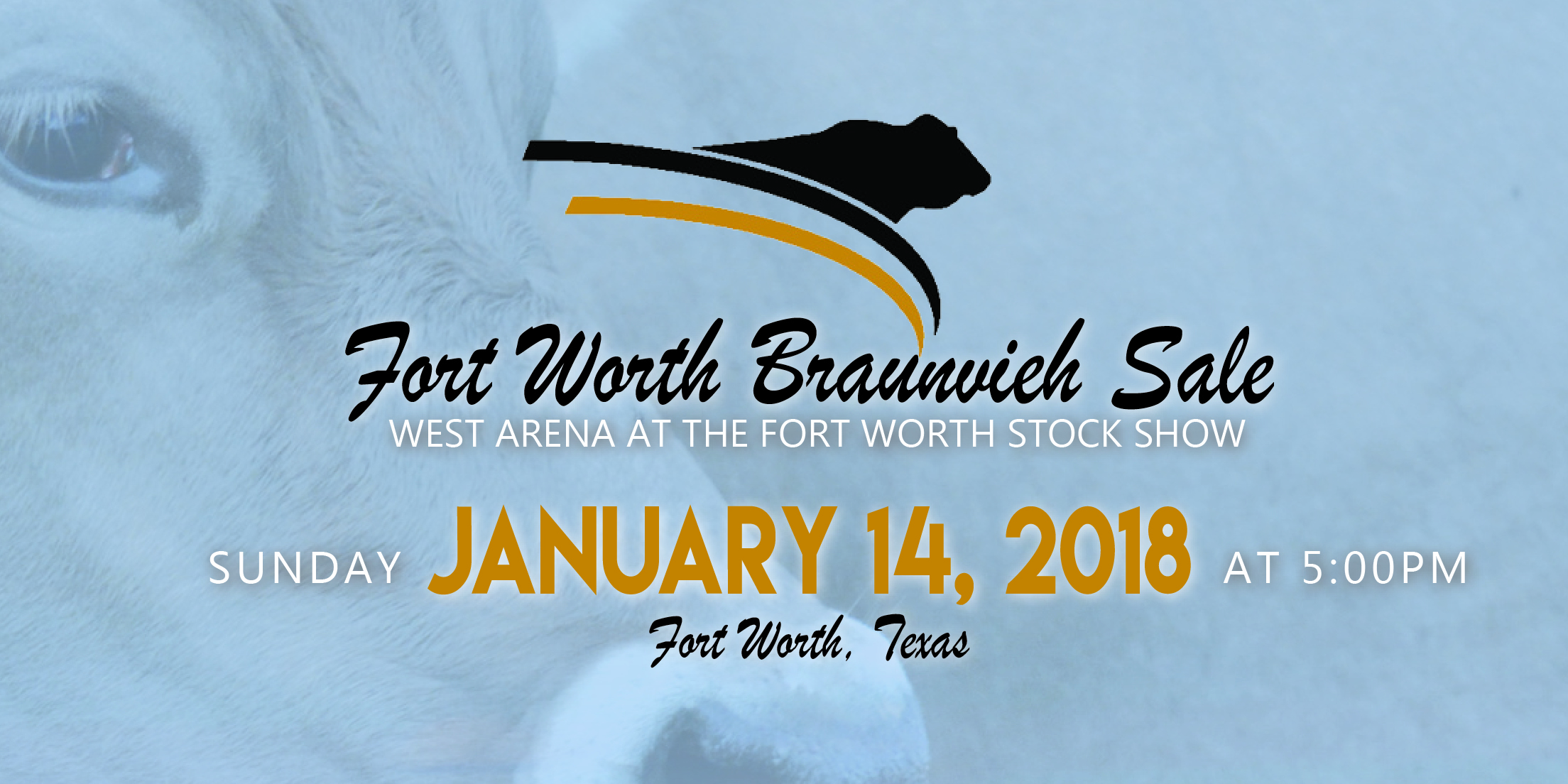 fort worth braunvieh sale feature image